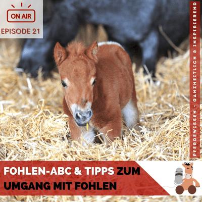 Pferdewissen - ganzheitlich & inspirierend mit Sandra Fencl - Fohlen-ABC & Tipps zum Umgang mit Fohlen