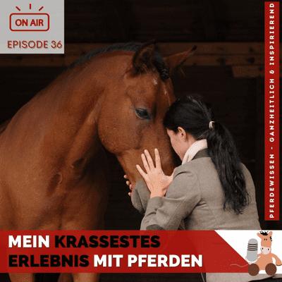 Mein krassestes Erlebnis mit Pferden