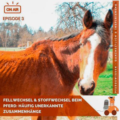 Pferdewissen - ganzheitlich & inspirierend mit Sandra Fencl - Fellwechsel und Stoffwechsel beim Pferd: Häufig unerkannte Zusammenhänge