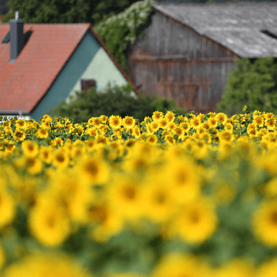 Vis à vis - Die neue Landlust
