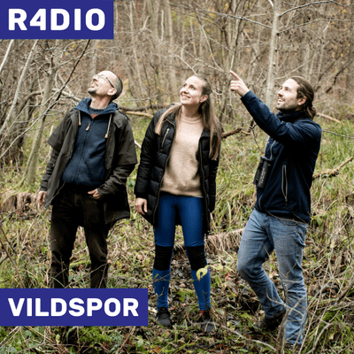 VILDSPOR - Skrab og vind