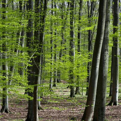 """Vis à vis - """"Der Wald muss ein Gemischtwarenladen werden"""""""