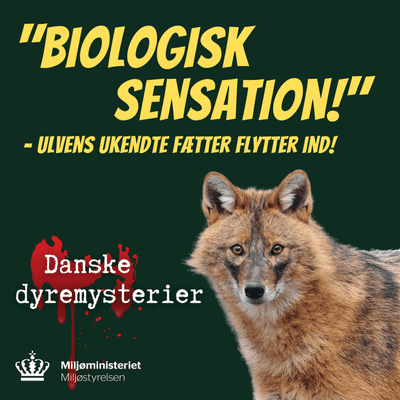 """Der står en puma i min have - """"Biologisk sensation!"""" – Ulvens ukendte fætter flytter ind!"""