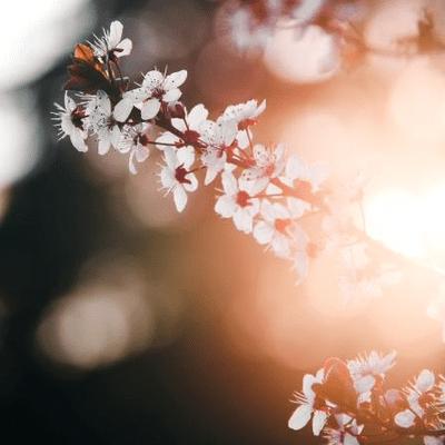 Lioran Schlafengehen – kleine Reisen zum Einschlafen und Entspannen - Frühlingsspaziergang