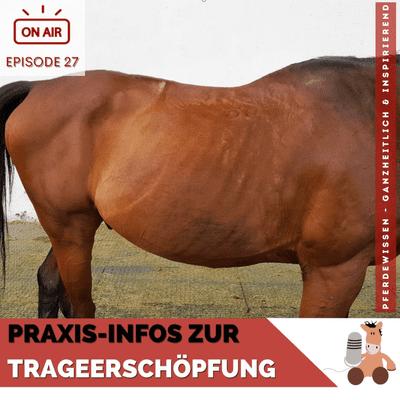 Pferdewissen - ganzheitlich & inspirierend mit Sandra Fencl - Trageerschöpfung bei Pferden