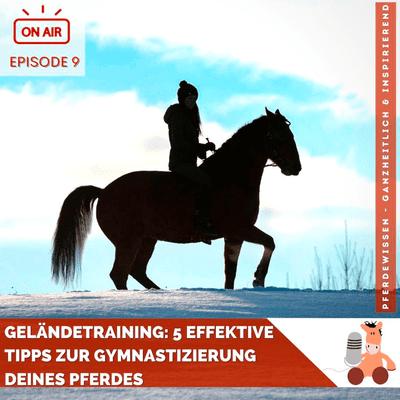 Pferdewissen - ganzheitlich & inspirierend mit Sandra Fencl - Geländetraining: 5 effektive Tipps zur Gymnastizierung Deines Pferdes